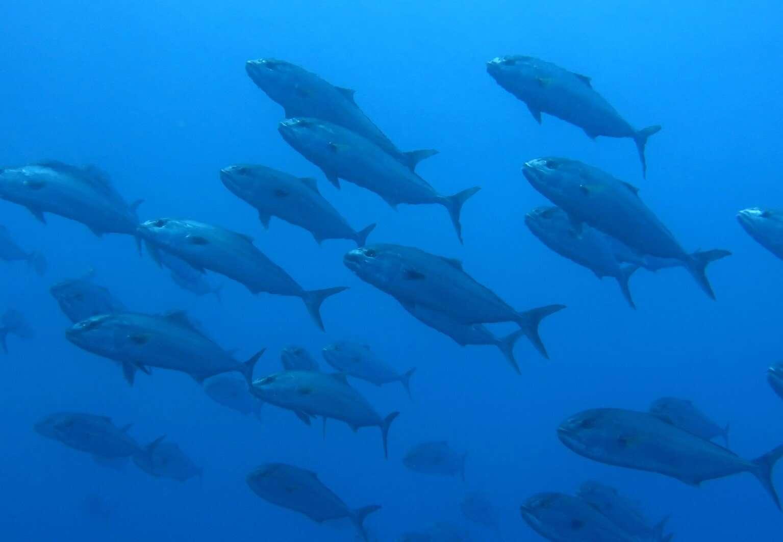 sub pesci